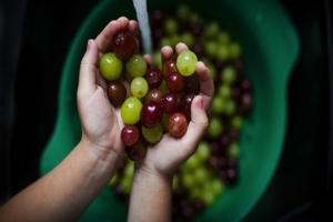 Le pouvoir anti-oxydant du raisin